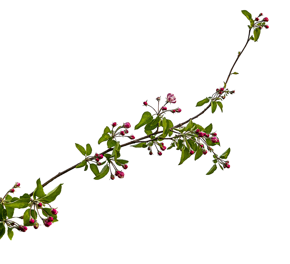 Frühling Blüten Ast